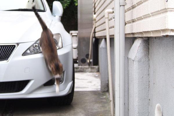 サーヤ 車から下りて来る