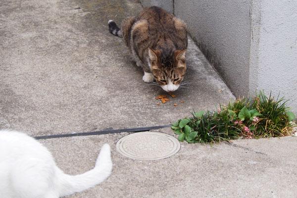 リリのしっぽを見ながら食べるサーヤ
