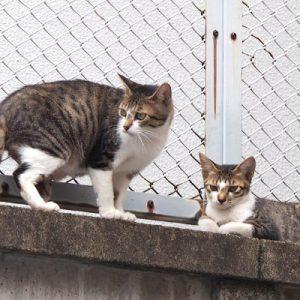 sakura and kitten