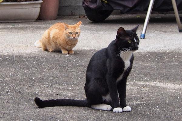 仔猫を見ているほのとソラ