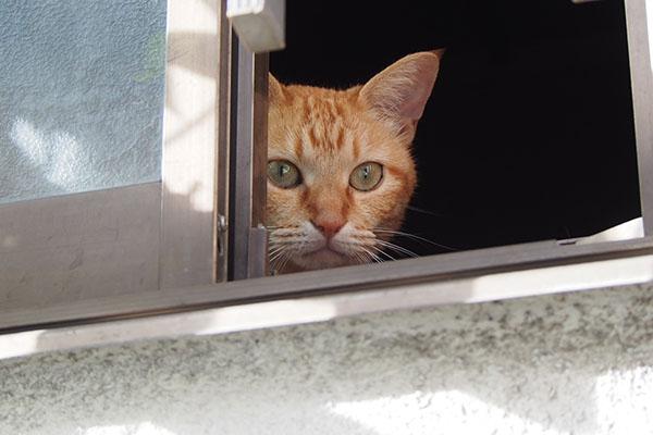 ソラちゃんがキー坊を見ている