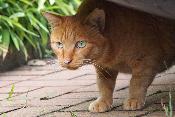 paw has green eye