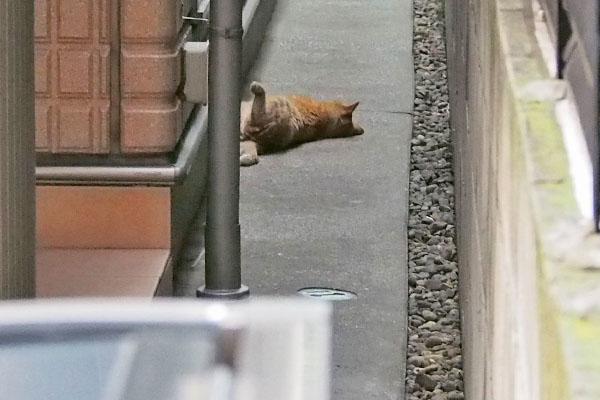 大胆な寝相の猫さん ビル脇