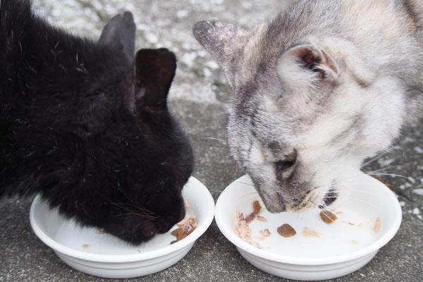 アカシと銀向かい合って食べる