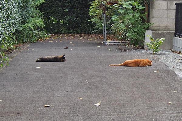 並んで寝ていたトッキーとコルレ
