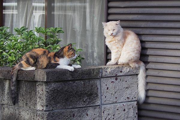 ナリコとオトワは連日セットに