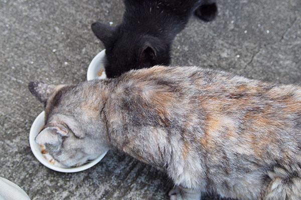 仲良く食べる銀とアカシ