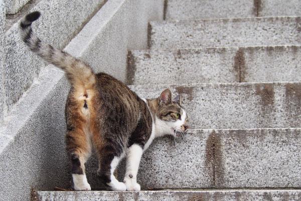 階段にスリスリする雫