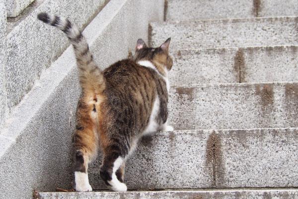 上に行こうにゃ 雫
