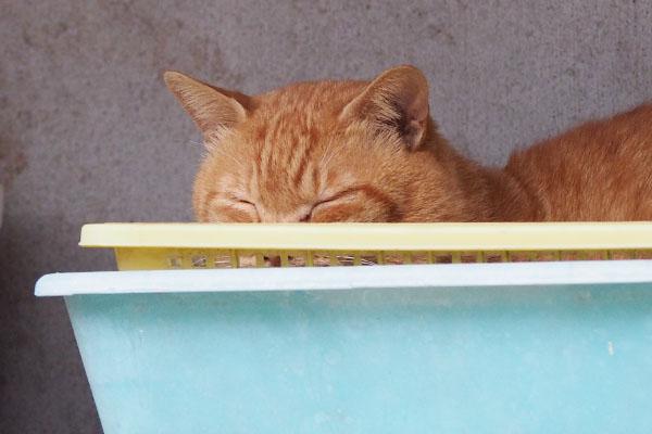寝ている ナチャ介