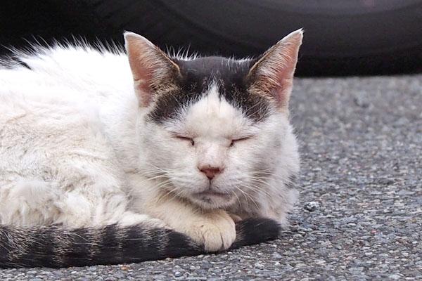ten sleeping face