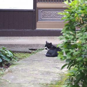 black and wahite cat