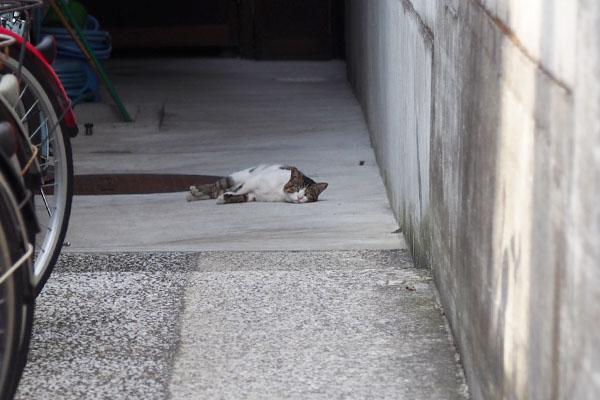 余裕で横になっていた レオ太