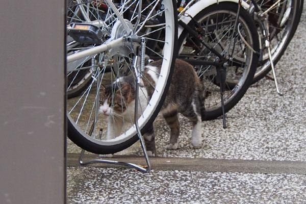 自転車の間 レオ太
