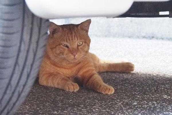 車の下に移動していたジン