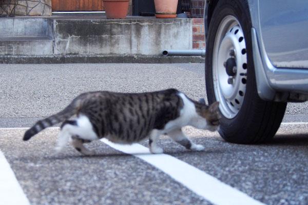 ジンがいる車の下へ入るさくら