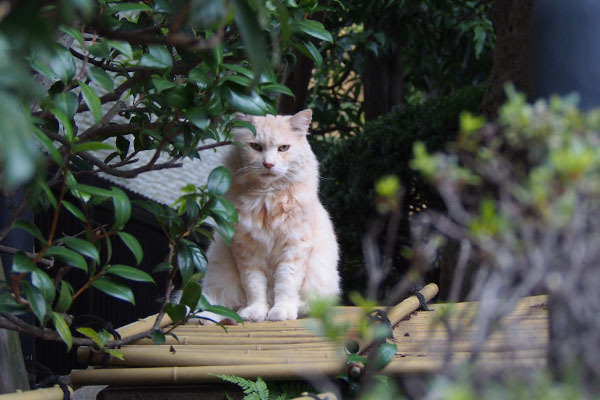 narikoma sitting neighborsplace