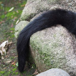 Tail of Akashi bkcat