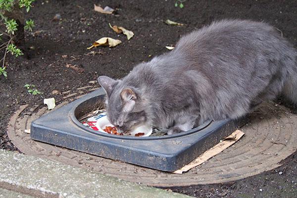 端っこで食べるらしい マフ