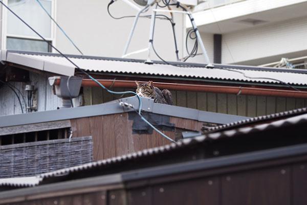 carol on the roof
