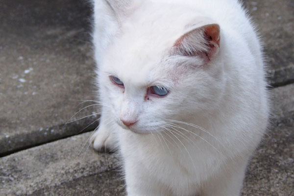 riri blue eyes