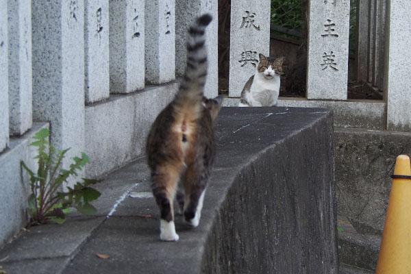 Shizuku says hallo to Reota