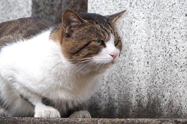 レオ太 猫ボラさんを待つにゃ