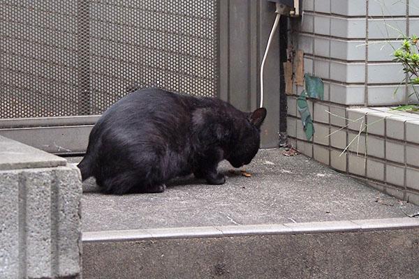 フェンスの手前 食べるティア