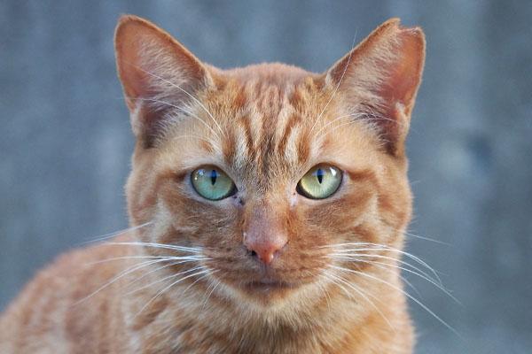 美猫のアン