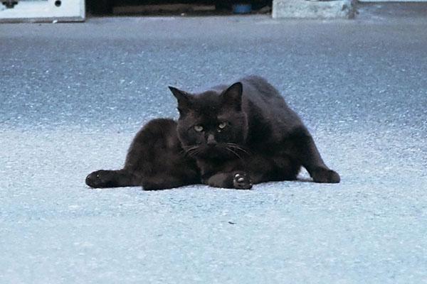 一度だけこちらを見た 黒猫さん