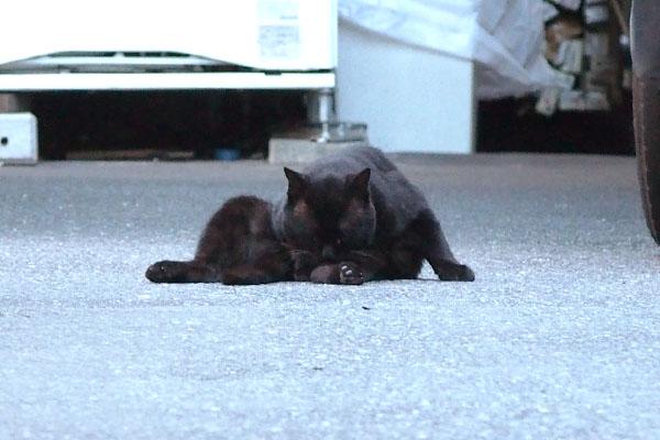 関係ないにゃ 再び舐め舐め 黒猫君