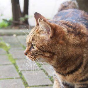 Kuratan profile left