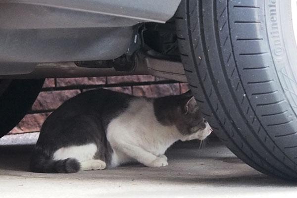 車の下にダル太みっけ
