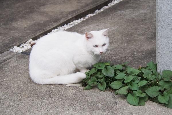 riri sitting beside leaves