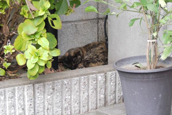 サビチッチ 花壇