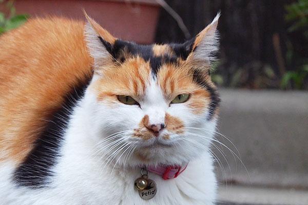 momo grumpy face