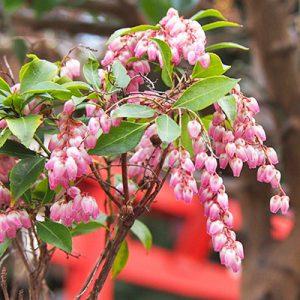 flower small pink shrine