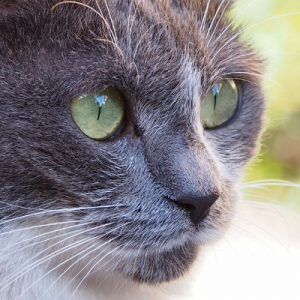 chibi close up