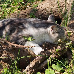 chrome napping on root of tree