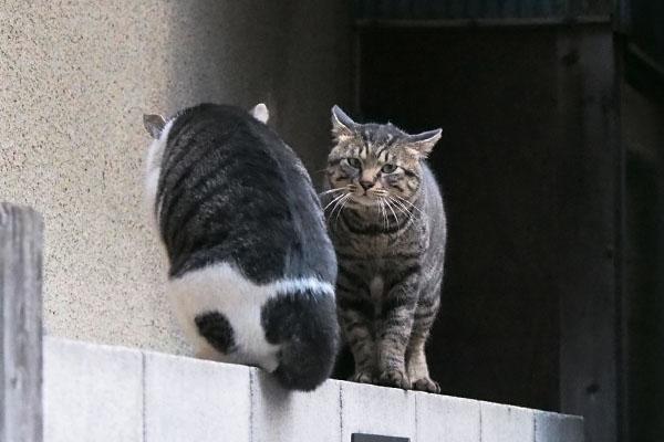 最後の一枚 キー坊とオンブレの背中