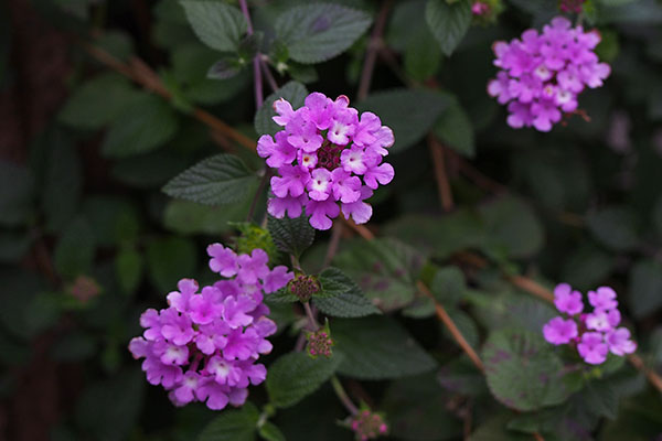 flower tiny
