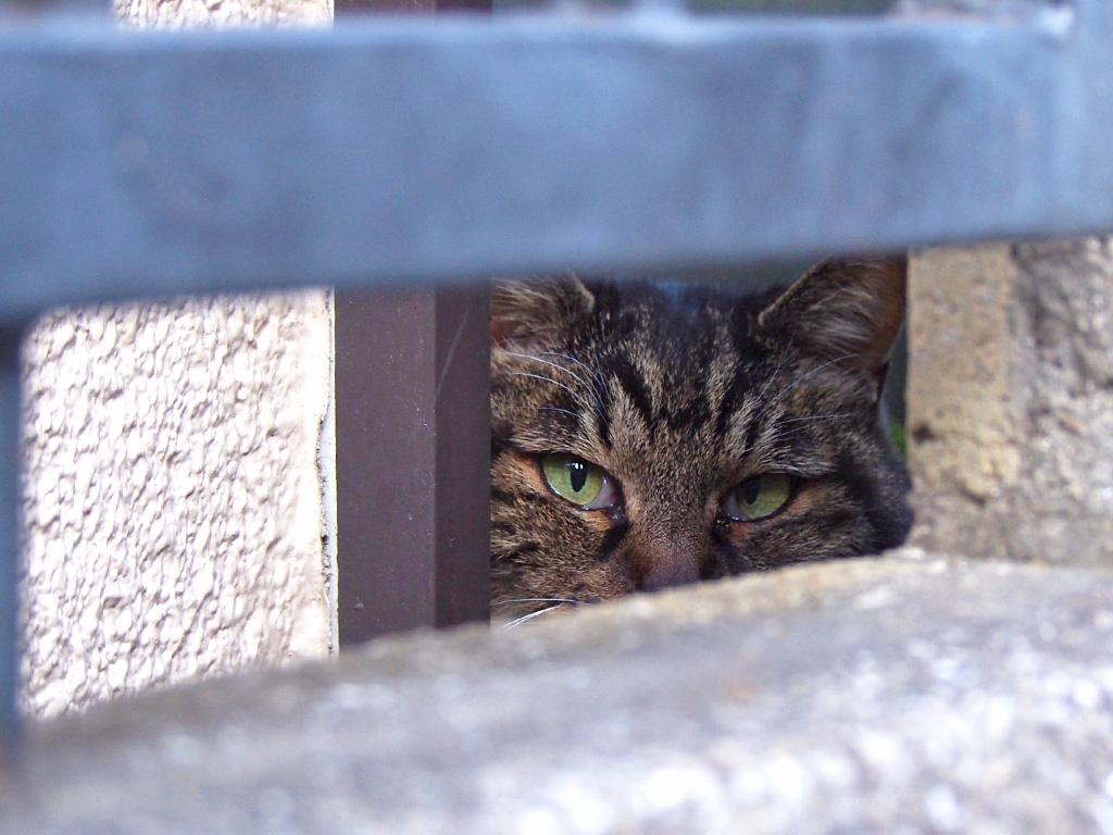kourai peeping