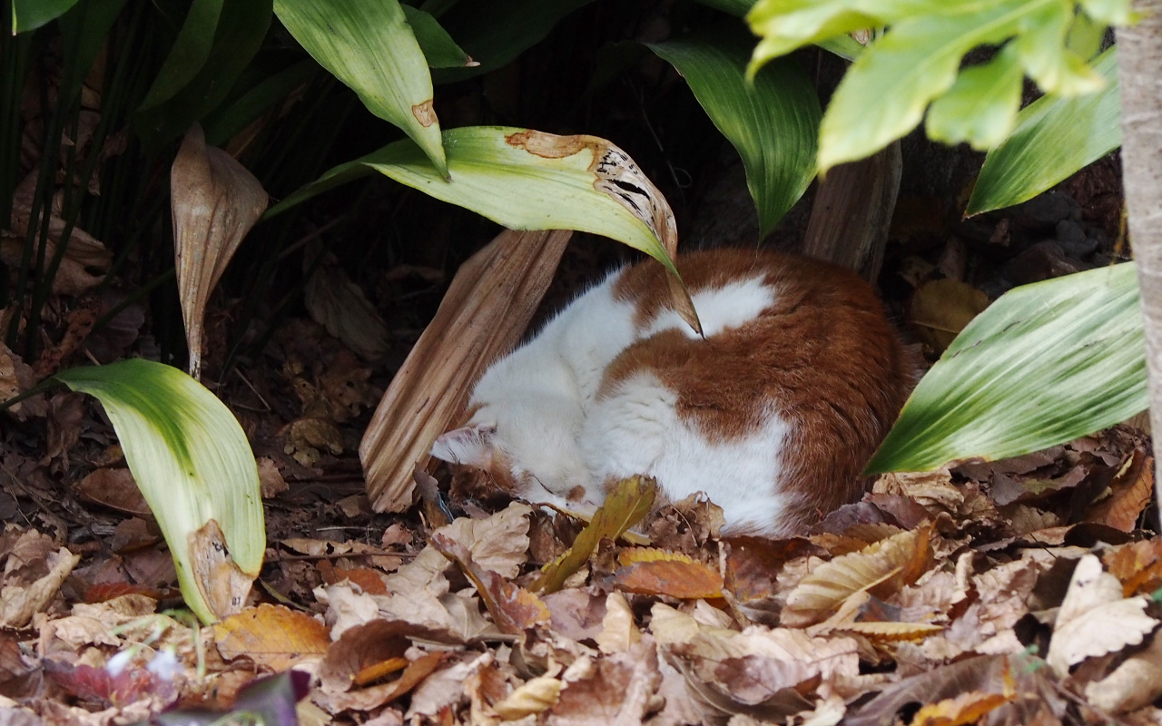 prin sleeping under big plant