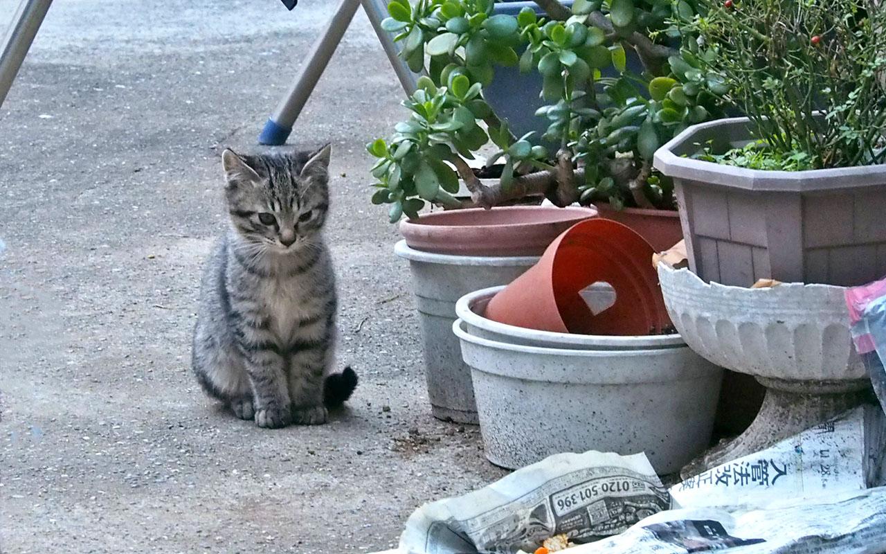 sakura's 3rd kitten sitting