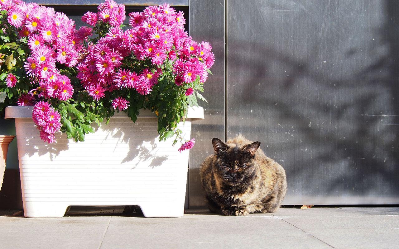 sabichicchi with winter small chrysanthemum