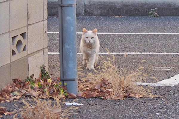 前進する白猫さん