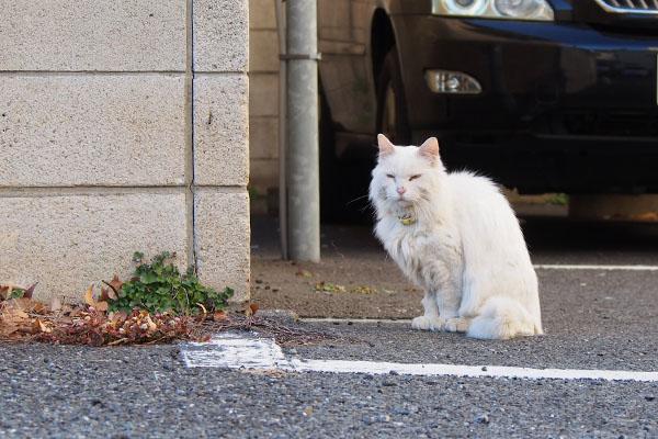 またね 白猫さん
