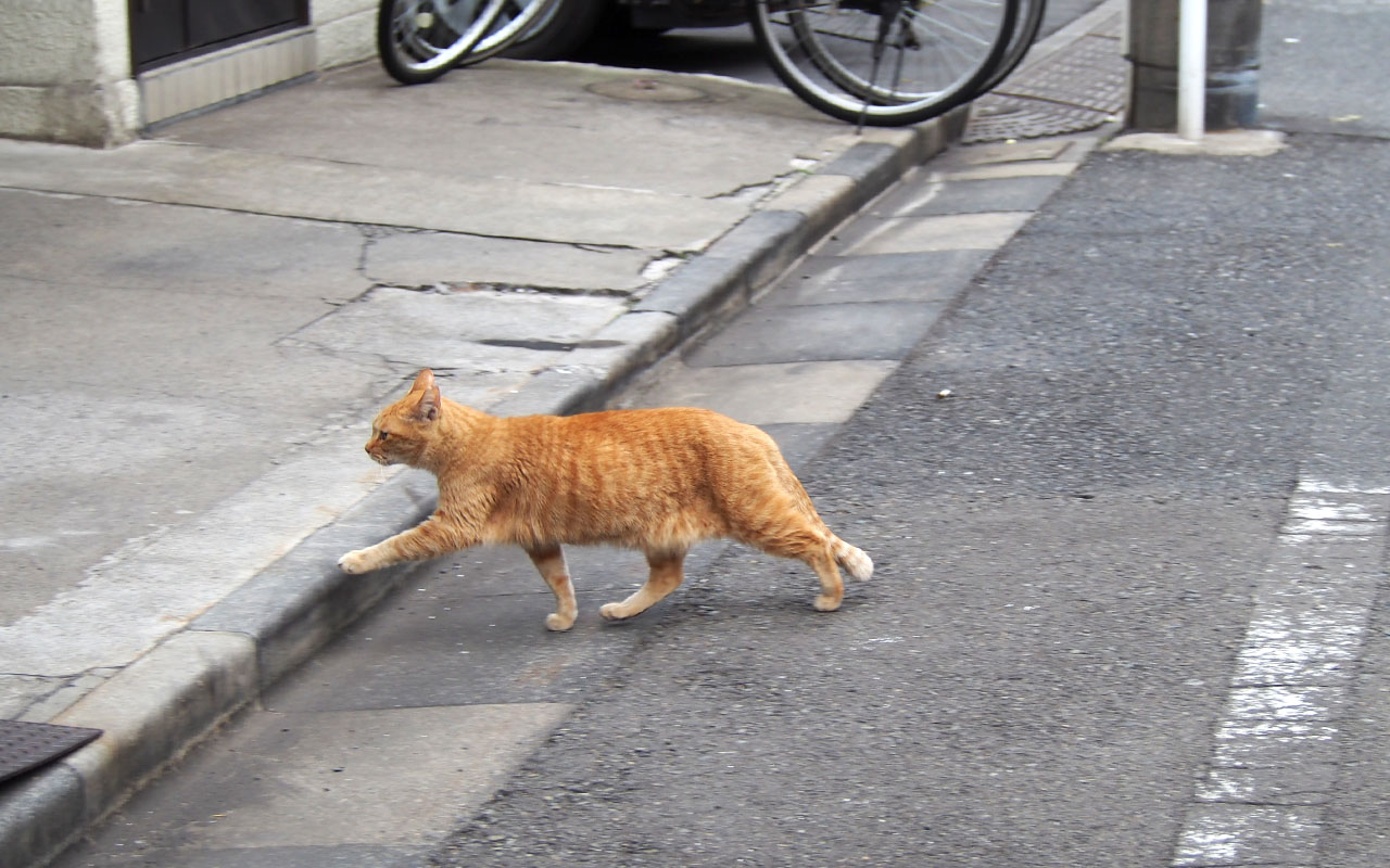 himawari cross the road
