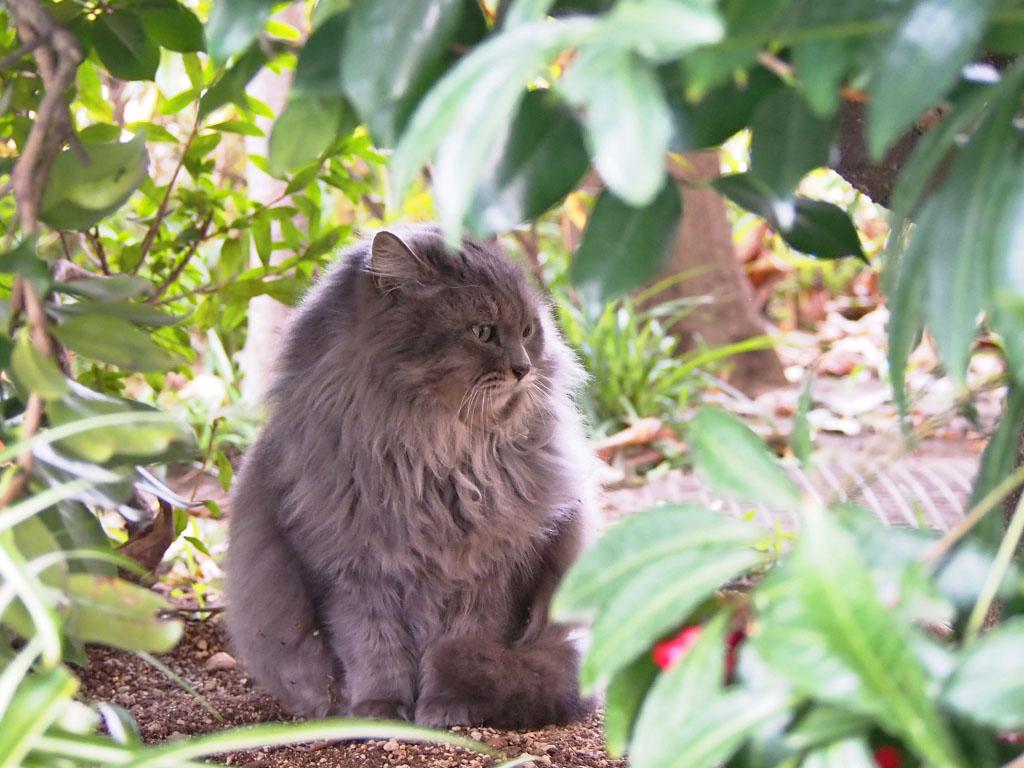 Mafu under the tree