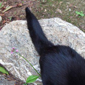 tail of Akashi when eating